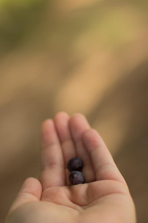 BlueberryHill001
