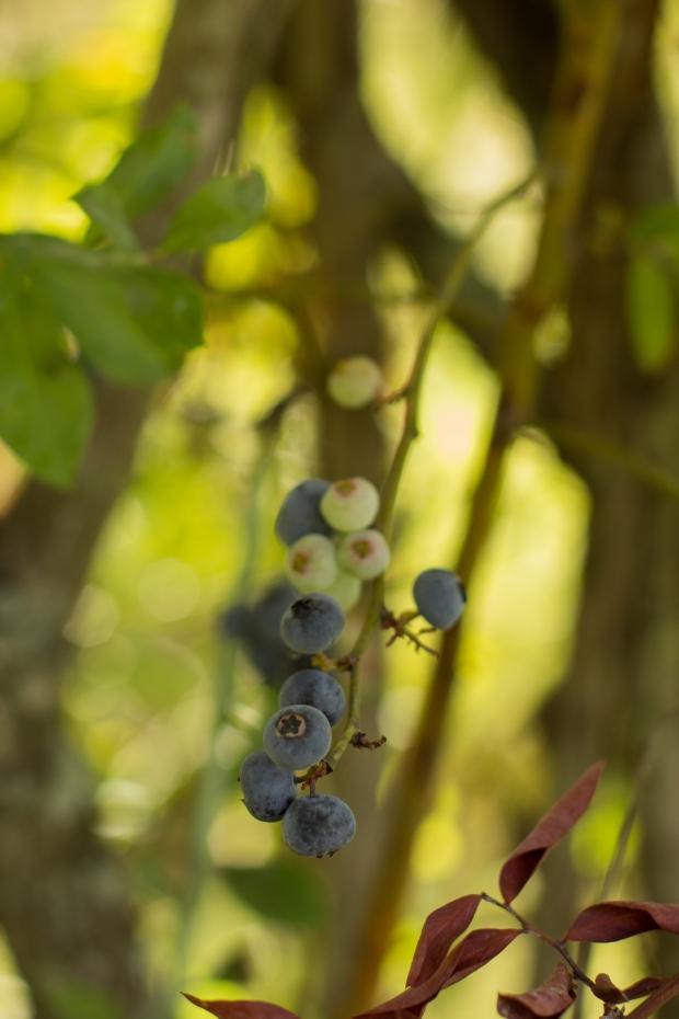 BlueberryHill012